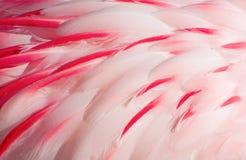 Pink flamingo feathers Stock Image
