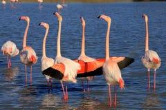 Pink flamingo Stock Photos