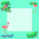 Pink flamingo frame Royalty Free Stock Photos
