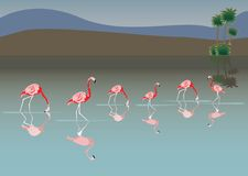 Pink flamingo in lake Royalty Free Stock Images