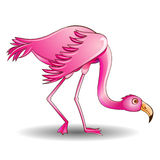Of a pink flamingo leaned on a white background Stock Image