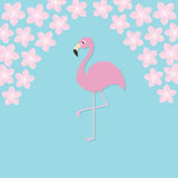 Pink flamingo on one leg. Exotic tropical bird. Zoo animal collection Stock Images