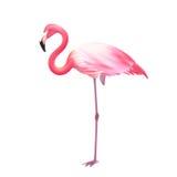 Pink Flamingo One Leg Realistic Icon. Pink elegant flamingo bird standing on one leg against white background realistic  image icon illustration vector Royalty Free Stock Photo