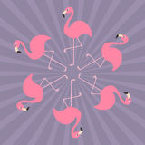 Pink flamingo on one leg. Round circle compisition. Exotic tropical bird.  Royalty Free Stock Photo