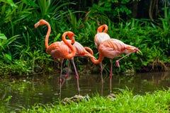 Pink flamingo in park Stock Photo