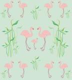Pink flamingo pattern Royalty Free Stock Image