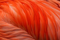 Pink flamingo plumage stock photos
