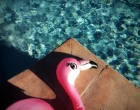 Pink flamingo by the pool royalty free stock photo