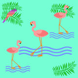 Pink flamingo poster Stock Photography