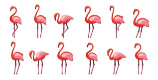 Pink flamingo set, vector illustration Isolated on white background vector illustration