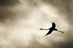 A pink flamingo silhouette in the grey sky Stock Image