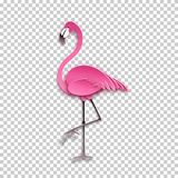 Pink flamingo standing on one leg. African exotic bird, cool sticker for birthday cards, party invitations, for tropical design Stock Photography