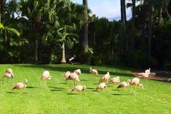 A pink flamingo - sunset`s child. National park, Spain, Tenerife stock photos