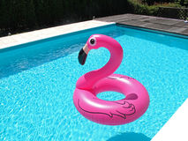 PINK FLAMINGO IN A SWIMMING POOL Royalty Free Stock Image