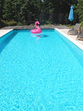 PINK FLAMINGO IN A SWIMMING POOL. PINK FLAMINGO IN A BLUE WATER SWIMMING POOL Stock Image