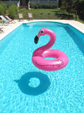 PINK FLAMINGO IN A SWIMMING POOL. PINK FLAMINGO IN A BLUE WATER SWIMMING POOL Stock Images
