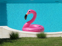 PINK FLAMINGO IN A SWIMMING POOL. PINK FLAMINGO IN A BLUE WATER SWIMMING POOL Stock Photos