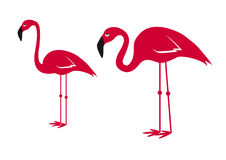 Pink flamingo vector. Flamingos on a white background. Cartoon character flamingo Stock Photography
