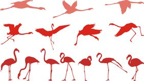 Pink flamingo, vector illustration royalty free illustration