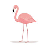 Pink flamingo vector illustration Royalty Free Stock Photography