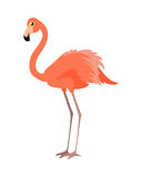 Pink Flamingo Vector Illustration. Wading Bird Royalty Free Stock Image