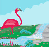 Pink flamingo in the water Stock Images