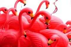 Pink Flamingos Royalty Free Stock Photo