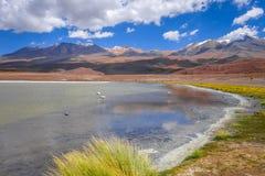 Pink flamingos in altiplano laguna, sud Lipez reserva, Bolivia Stock Photography