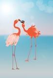 Pink Flamingos arguing Royalty Free Stock Image