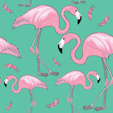 Pink flamingos with black beaks with pink feathers around them. Seamless pattern. Vector illustration on turquoise background. Hand drawn two flamingos with pink vector illustration