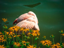 Pink flamingos lovers sleeping royalty free stock images
