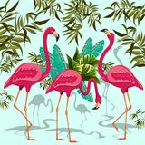 Pink Flamingos Exotic Birds. Pink Flamingos Vector illustration. Three Flamingos on three different Positions, with Ornamental Tropical Plants and Leaves Royalty Free Stock Photo