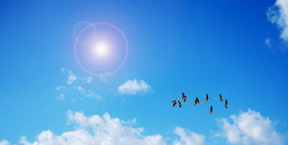 Pink flamingos flying under the sun Royalty Free Stock Photo
