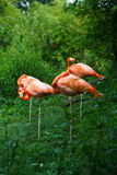 Pink flamingos. A group of pink flamingos, in Schonbrunn Tiergarden, zoo, Wien, Austria Stock Images