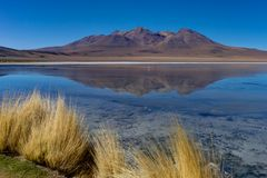 Pink Flamingos at Laguna Canapa Altiplano Bolivia Desert. Photo taken in August 2017 in Altiplano Bolivia, South America: Pink Flamingos Laguna Hedionda Royalty Free Stock Images