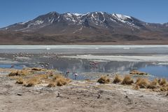 Pink flamingos at Laguna Chiarkota - Chair KKota 4700 mt is a shallow saline lake in the southwest of the altiplano of Bolivia Stock Image
