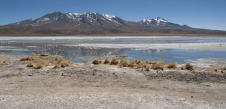 Pink flamingos at Laguna Chiarkota - Chair KKota 4700 mt is a shallow saline lake in the southwest of the altiplano of Bolivia Royalty Free Stock Image
