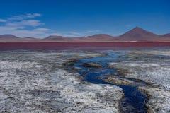 Pink Flamingos at Laguna Colorada Altiplano Bolivia Royalty Free Stock Photo