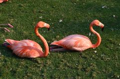 Pink Flamingos Royalty Free Stock Photography
