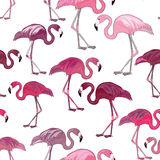 Pink flamingos seamless pattern. Vector illustration on white background. Hand drawn pink flamingos seamless pattern on white background royalty free illustration