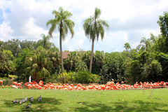 Pink flamingos. Sitting on the bank of the lake Stock Photo