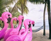 Pink flamingos on the tropical beach. Stock Image
