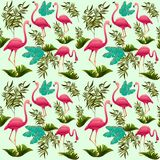 Pink Flamingos Vector illustration. Decorative design elements. Exotic Bird. Flamingo Shapes. Pink Flamingos Vector illustration. Three Flamingos on three royalty free illustration