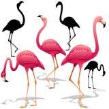 Pink Flamingos Vector illustration. Isolated Decorative design elements. Exotic Bird. Flamingo Shapes. Pink Flamingos Vector illustration. Three Flamingos on royalty free illustration