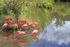 Pink flamingos in water Stock Photo