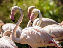 Pink flamingos by the water Stock Photo