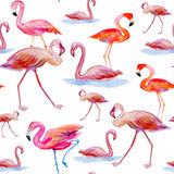 Pink flamingos  a white background. Stock Photography