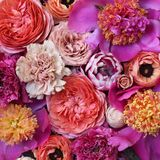 Pink Flat Lay of Flowers. Roses, peonies, carnations, ranunculus and other flowers in all shades of pink. Botanical styled floral flatlay Royalty Free Stock Photography
