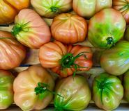 Pink fleshy tomatoes. Favorite vegetable of different varieties Royalty Free Stock Photography