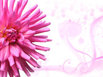 Pink Floral Background Royalty Free Stock Photo